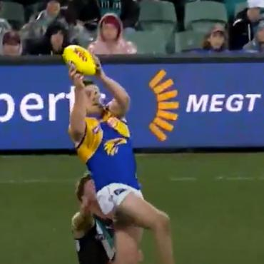 cameo in AFL